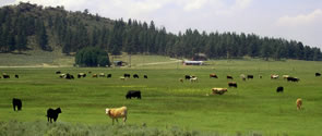 Sprague River Stock Ranch